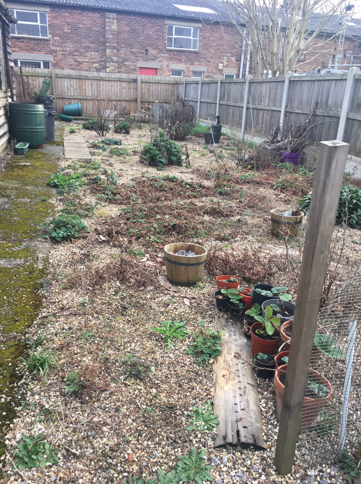 Garden 101 looking overgrown, covered in gravel and generally quite sad when I inherited it