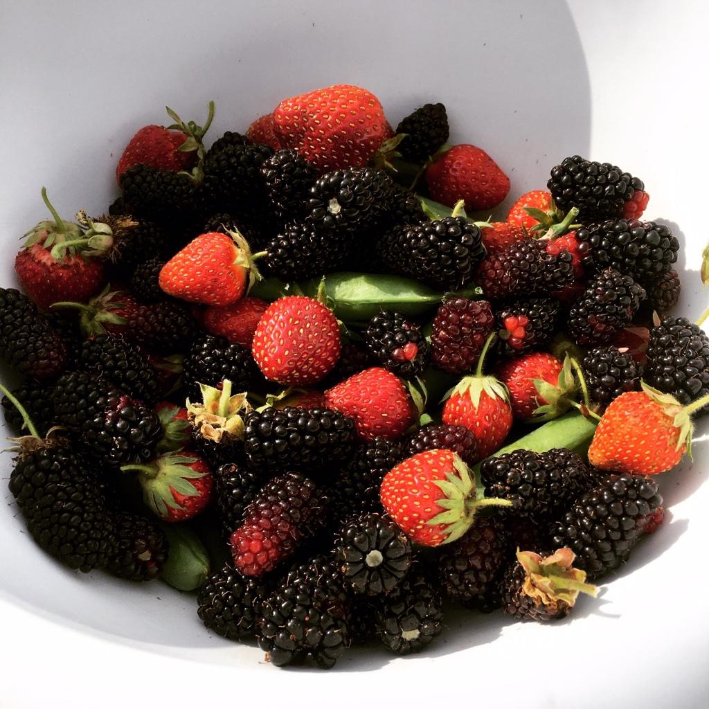 Freshly picked strawberries and loganberries